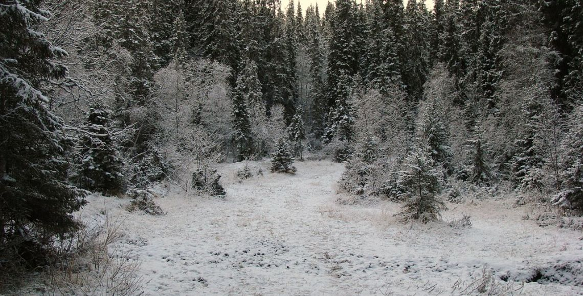 Floresta boreal norueguesa no início do inverno | Foto Wikimedia