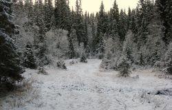 Floresta boreal norueguesa no início do inverno   Foto Wikimedia