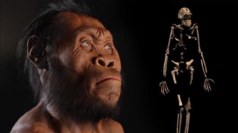 Βρέθηκαν απολιθώματα του Homo naledi στη Νότια Αφρική