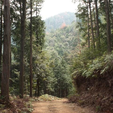 造林 木 林業