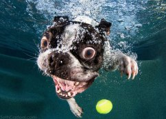 underwater-photos-of-dogs-fetching-their-balls-by-seth-casteel-3