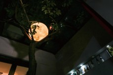 Luna-Moon-Lantern-4