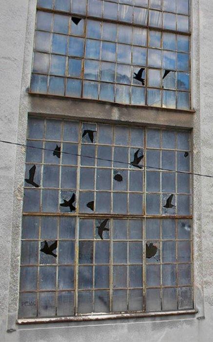 brokenwindowbirds04