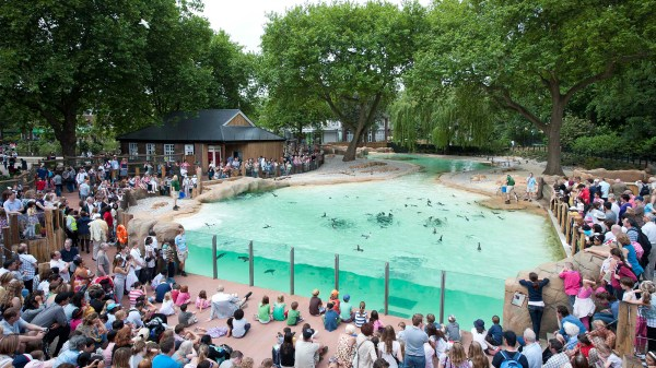 Penguin Beach Zoological Society Of London Zsl