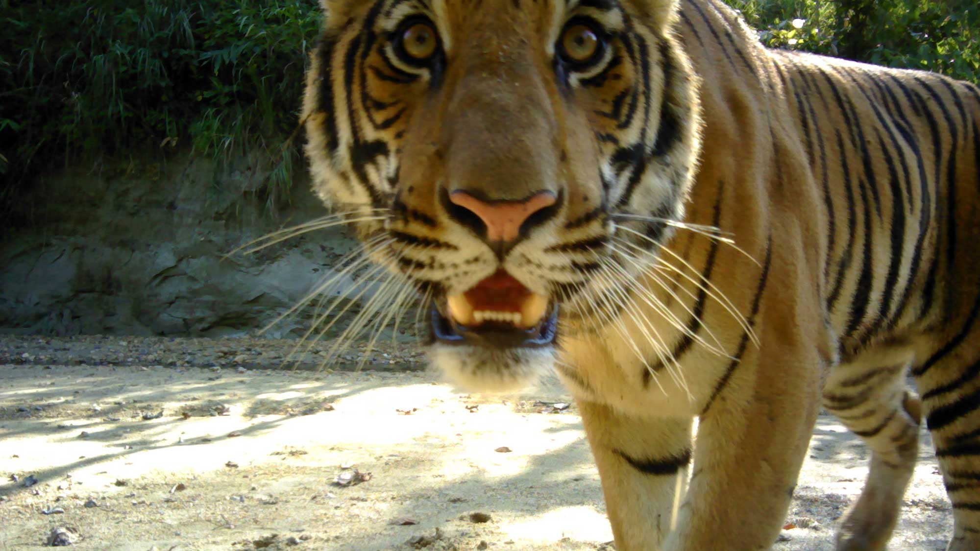 Boost for tigers as Nepal nature reserve expanded