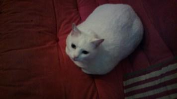 Dentro de casa, com iluminação fraca: foco não encontrou a Mia