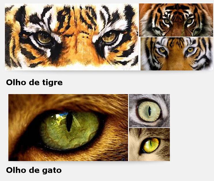 Olho_tigre_x_gato