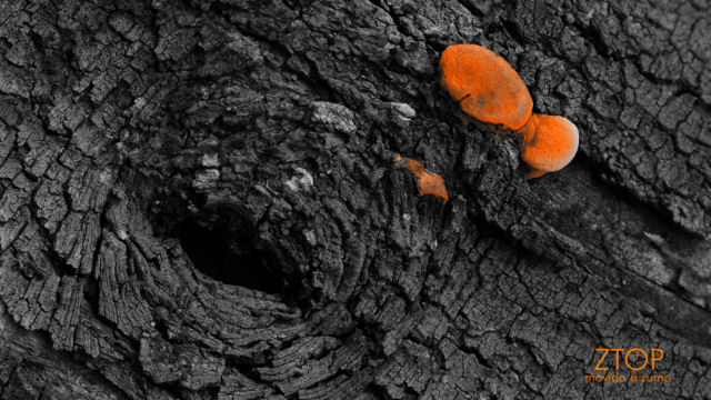 Fuji_xt1_filtro_Selec_Orange2