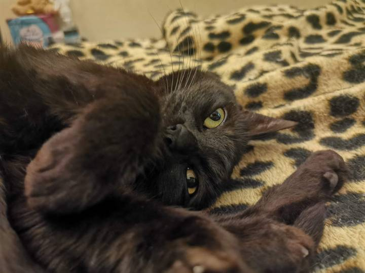 Huawei P30 Pro: gato preto num quarto com luz ambiente baixa