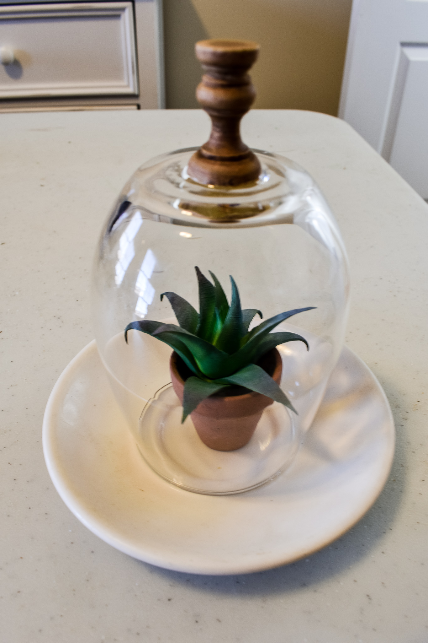 faux succulent in a small terra cotta flower pot under a cloche
