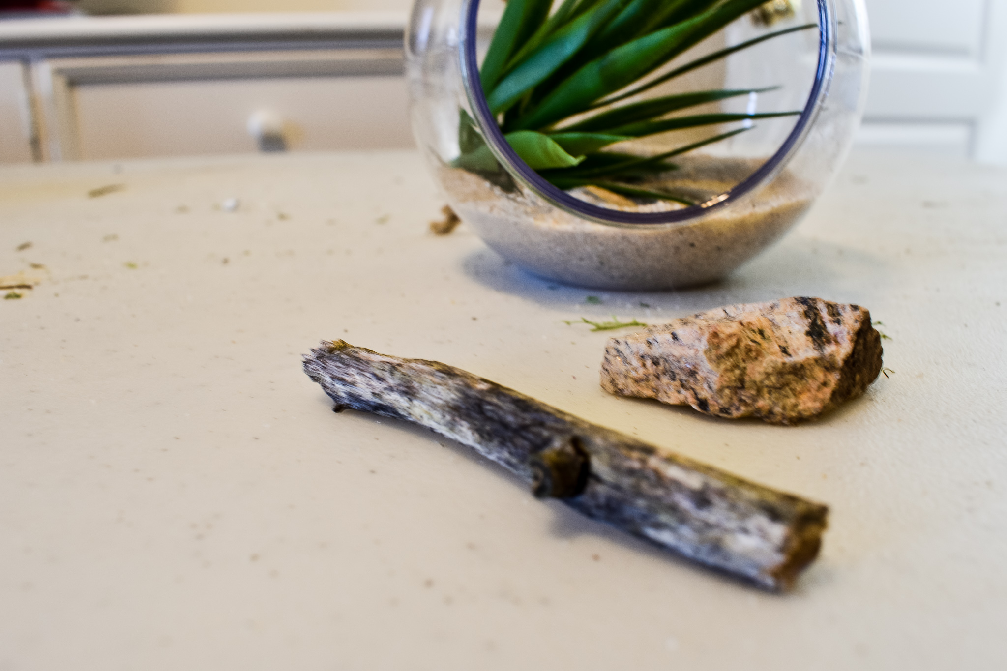 a twig and rock to place inside terrarium with sand and a faux succulent