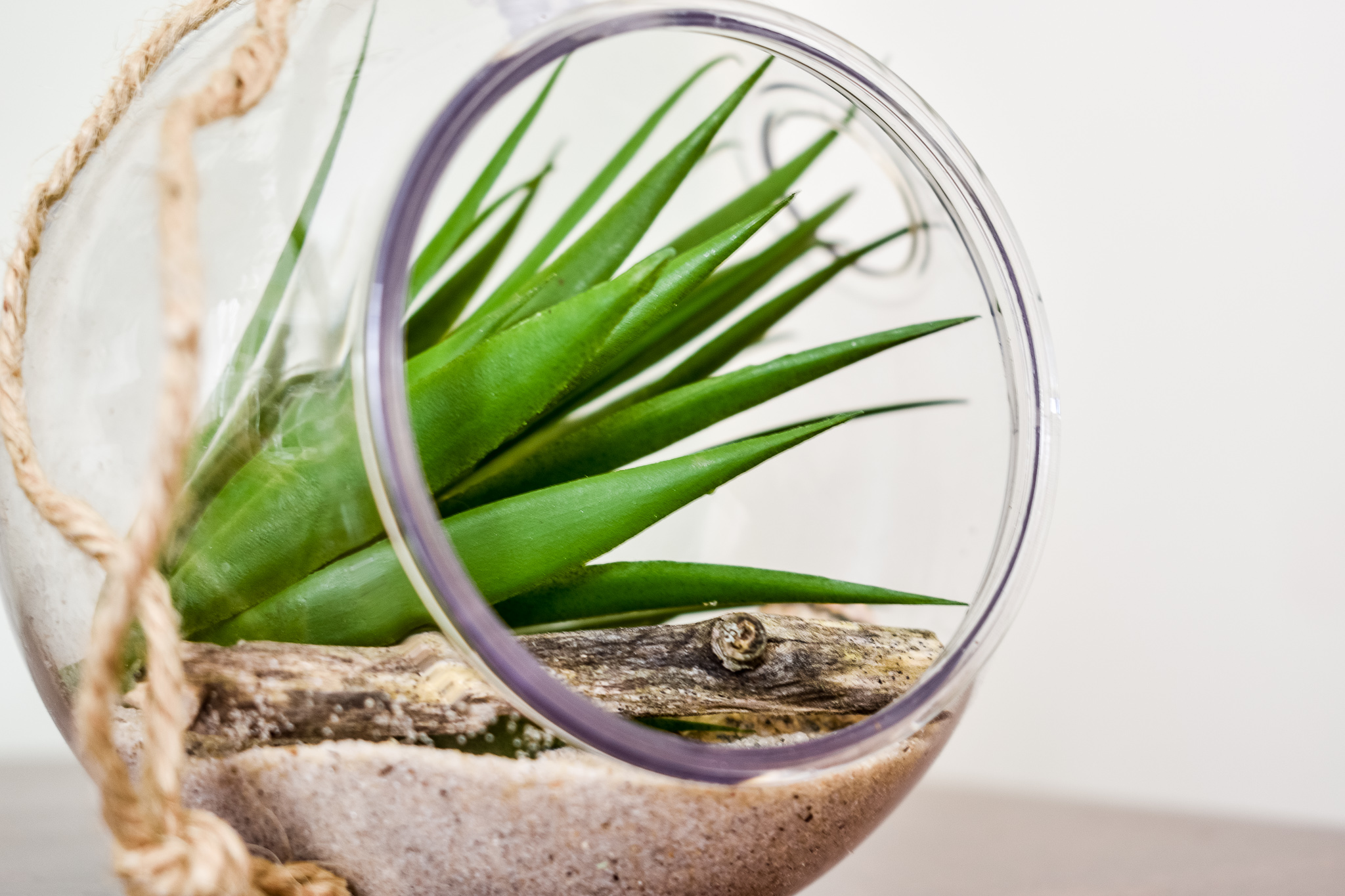 faux succulent decor ideas includes a Dollar Tree faux succulent inside a small round terrarium with sand and a twig