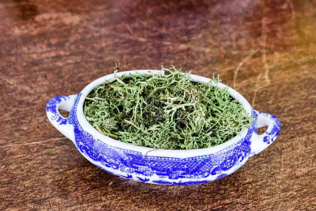blue willow trinket dish filled with reindeer moss