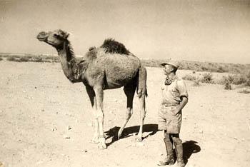 Foto aus dem Afrikafeldzug, Album von Herbert Köhler, das er später in die Kriegs- gefangenschaft nach Kanada mitnahm; Libyen