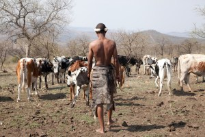 Zulucow's Nguni cowhide rugs are sustainably sourced and a by-product of the food industry in S.Africa.