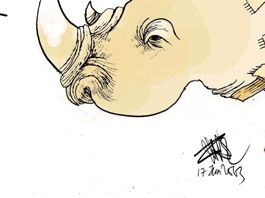 CARTOONKINI-RHINO-17-Jun-2013-thumbnail