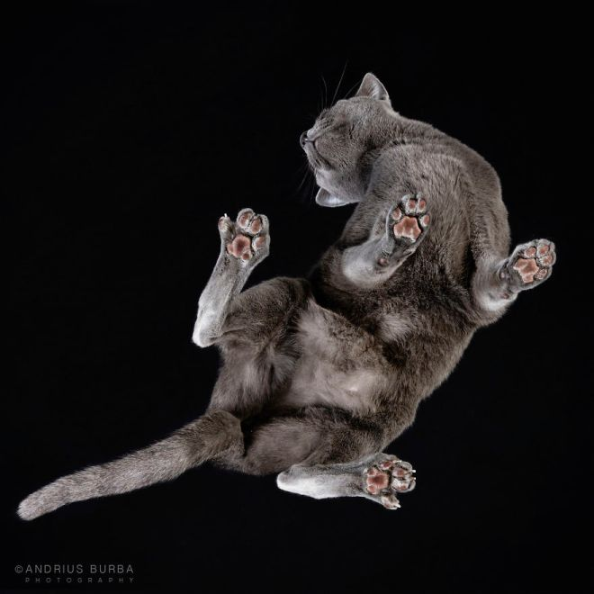 25-photos-of-cats-taken-from-underneath-11__880