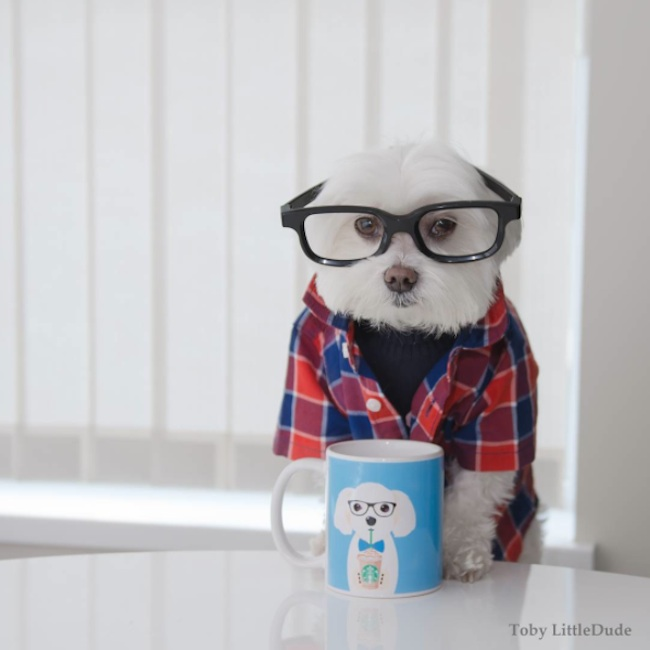 Meet_Toby_LittleDude_The_Charming_Hipster_Dog_Of_Instagram_with_Attitude_2016_05