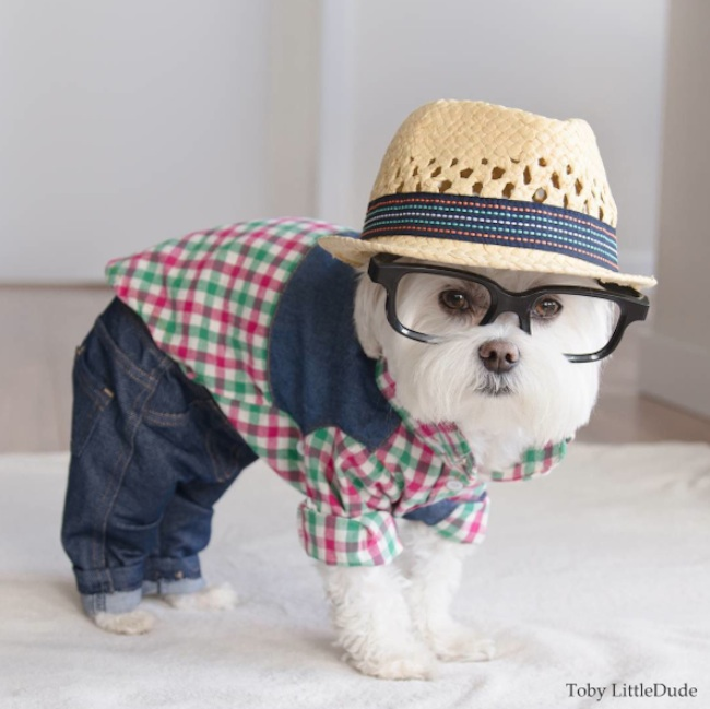 Meet_Toby_LittleDude_The_Charming_Hipster_Dog_Of_Instagram_with_Attitude_2016_08
