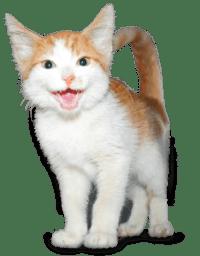 donateurschap Stichting Zwerfkatten Rijnmond