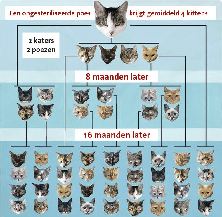 kattenpiramide_NL