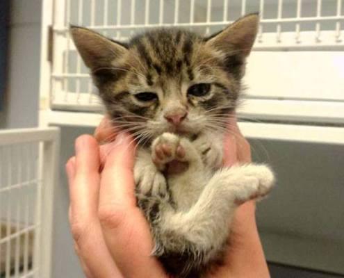 2016 Kittens in water gevallen