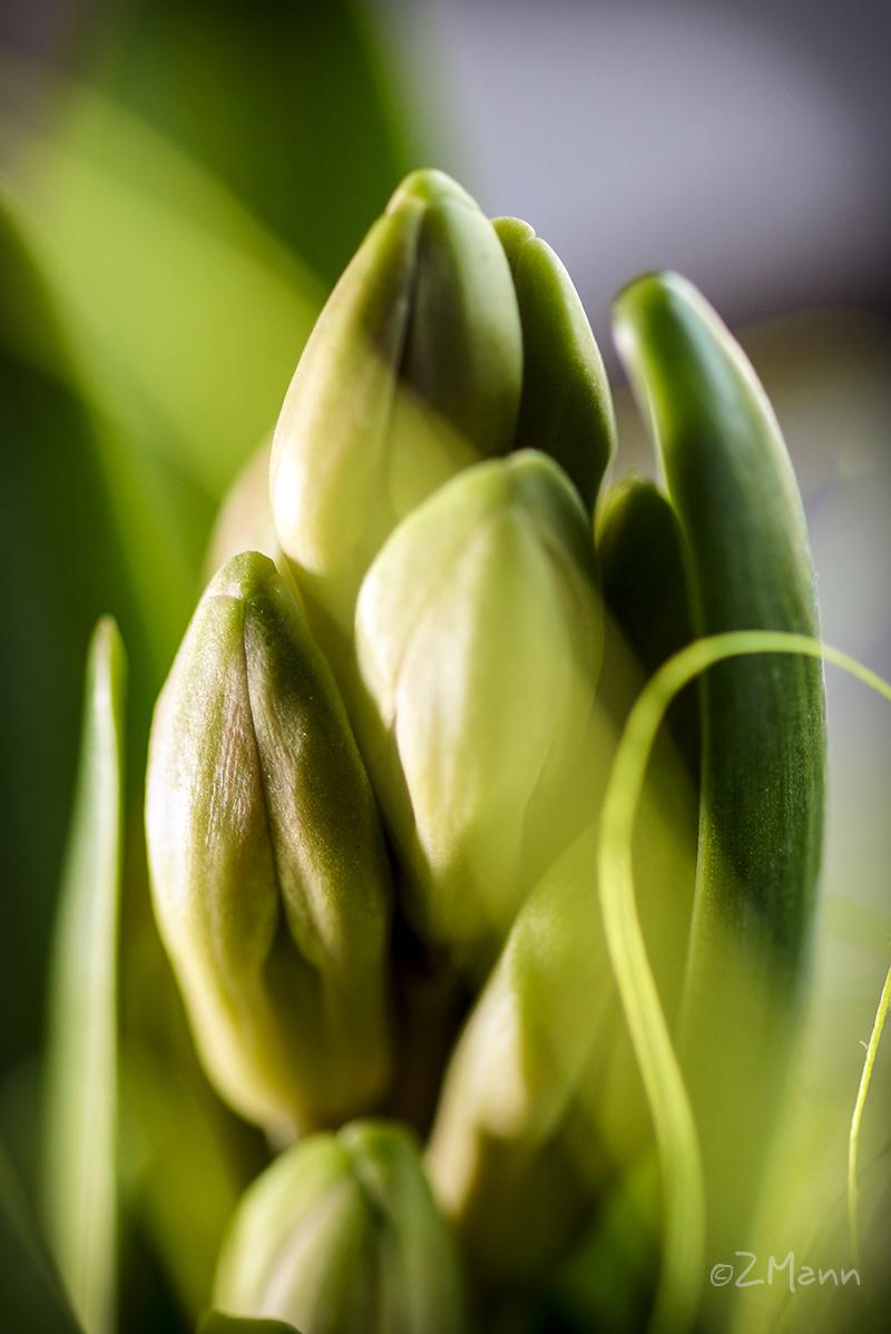 z widokiem na stół | fotogaleria wiosna na stole