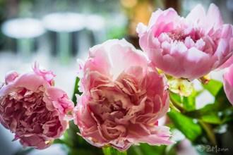 z widokiem na stół | słoiki . słoiki . słoiki i kwiaty