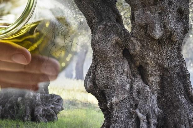 z widokiem na stół | travel notes . . . Puglia : gaje oliwne i cudowna oliwa