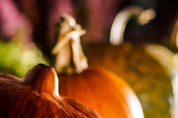 z widokiem na stół | październikowe tapety