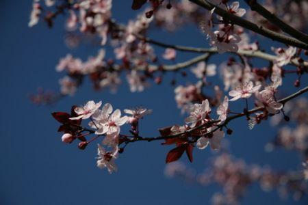 Spring in Berkeley