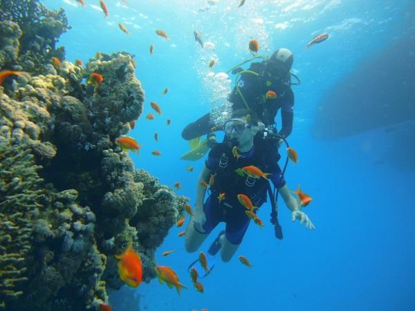 Nurkowanie przy rafie wyspy Tiran Egipt