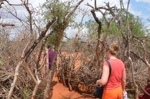 Wioska masajska brama Kenia