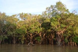 Tonle Sap las namorzynowy Kambodża