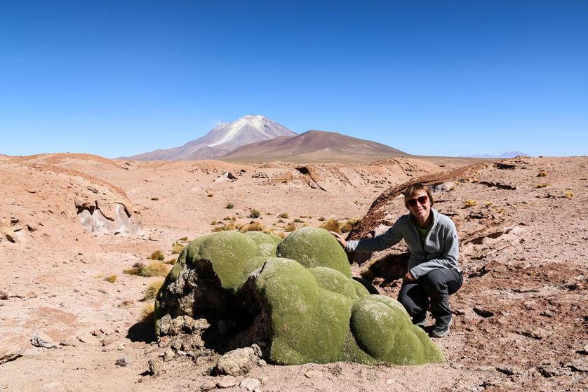 Koralowce wycieczka Salar de Uyuni Boliwia