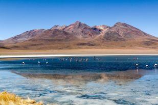 Laguna flamingi wycieczka Salar de Uyuni Boliwia