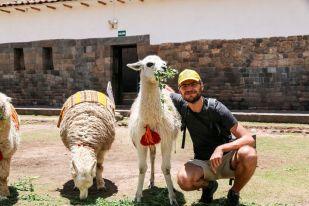 Lamy Cusco Peru