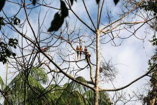 Papugi jezioro Sandoval 3 Peru