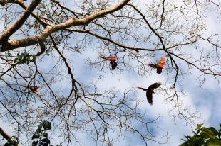 Papugi jezioro Sandoval 4 Peru