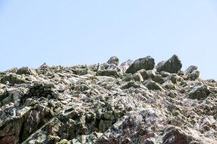 Pingwiny Islas Ballestas Peru