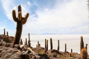 Widok z wyspy Incahuasi Boliwia