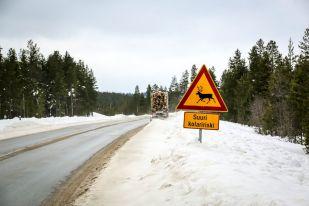 Znak uwaga renifery Finlandia