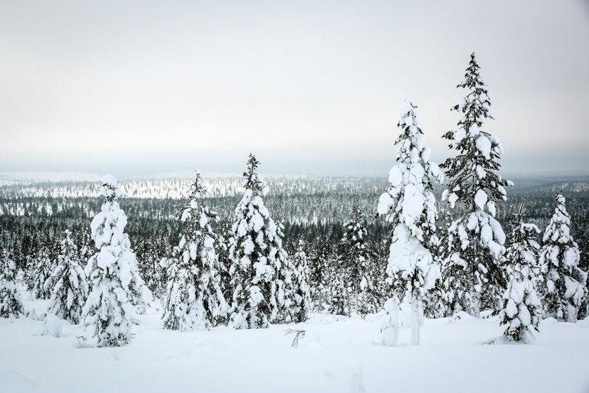 Krajobrazy Park Narodowy Urho Kekkonena 2 Finlandia