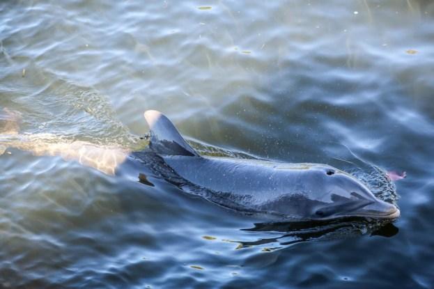 Delfin Kuba