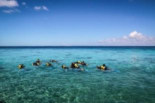 Nurkowanie w Zatoce Świń