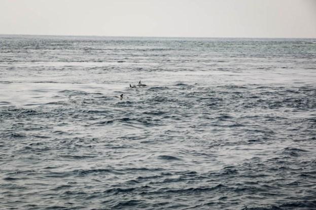 Malediwy nurkowanie delfiny