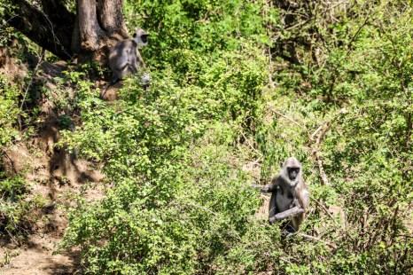 Park Narodowy Yala 10