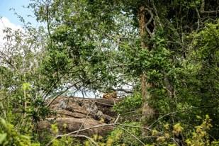 Park Narodowy Yala lampart