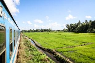 Pola ryżowe pociąg Sri Lanka
