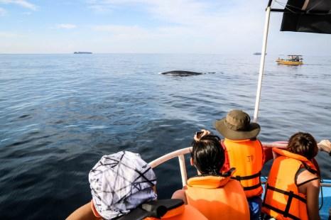 Rejs na oglądanie wielorybów Mirissa 8